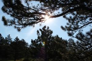 soft sunlight